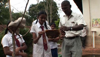 ミツバチのいる風景 7回 シリーズ スリランカ