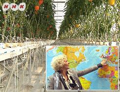 ドキュメンタリーWAVE 中国 農業